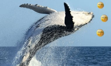 "One enormous 'Whale"" transaction sends Bitcoin community into FUD"
